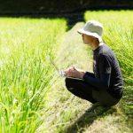 新之助の価格や販売先(通販)は?新潟のブランド米の美味しさも調査